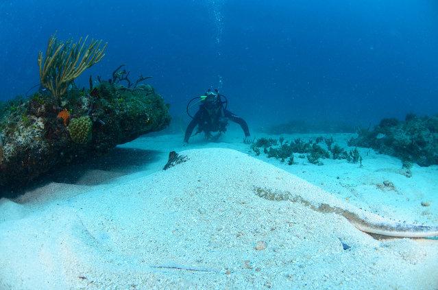 Diving in Sint Maarten, Great Bay - By Harold Leighton Saberon
