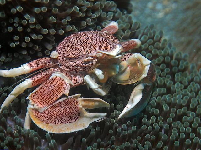 Diving in Denpasar, Indonesia - By François Metzler